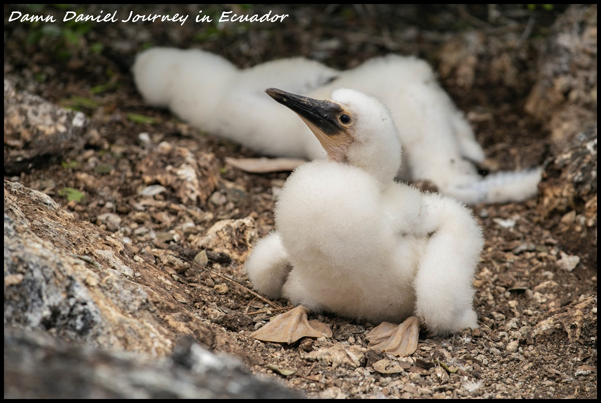 [厄瓜多] 加拉巴哥群島Galapagos Islands攻略 探索以達爾文進化論聞名全世界之島嶼 近距離與無數奇幻生物接觸同遊 @小盛的流浪旅程
