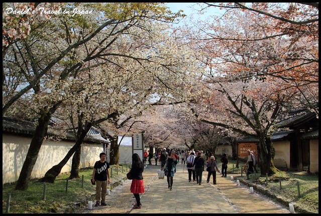 【日本京都】世界文化遺產醍醐寺 壯觀絕美的賞櫻名所 @小盛的流浪旅程