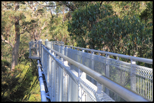 【澳洲塔斯馬尼亞】Tahune Forest Airwalk 塔胡恩天空步道 尋找再一次心跳的聲音 @小盛的流浪旅程