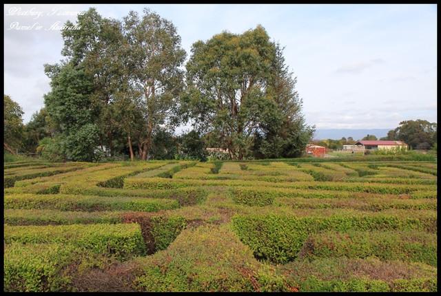 【澳洲塔斯馬尼亞】迷失在歷史悠久的古老城鎮Westbury Maze @小盛的流浪旅程