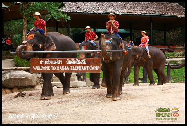 【泰國清邁】Mae Sa Elephant Camp湄沙大象營之大象絕技表演 @小盛的流浪旅程