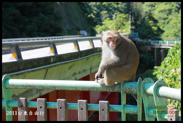 【台東東河】泰源幽谷賞猴記行 @小盛的流浪旅程